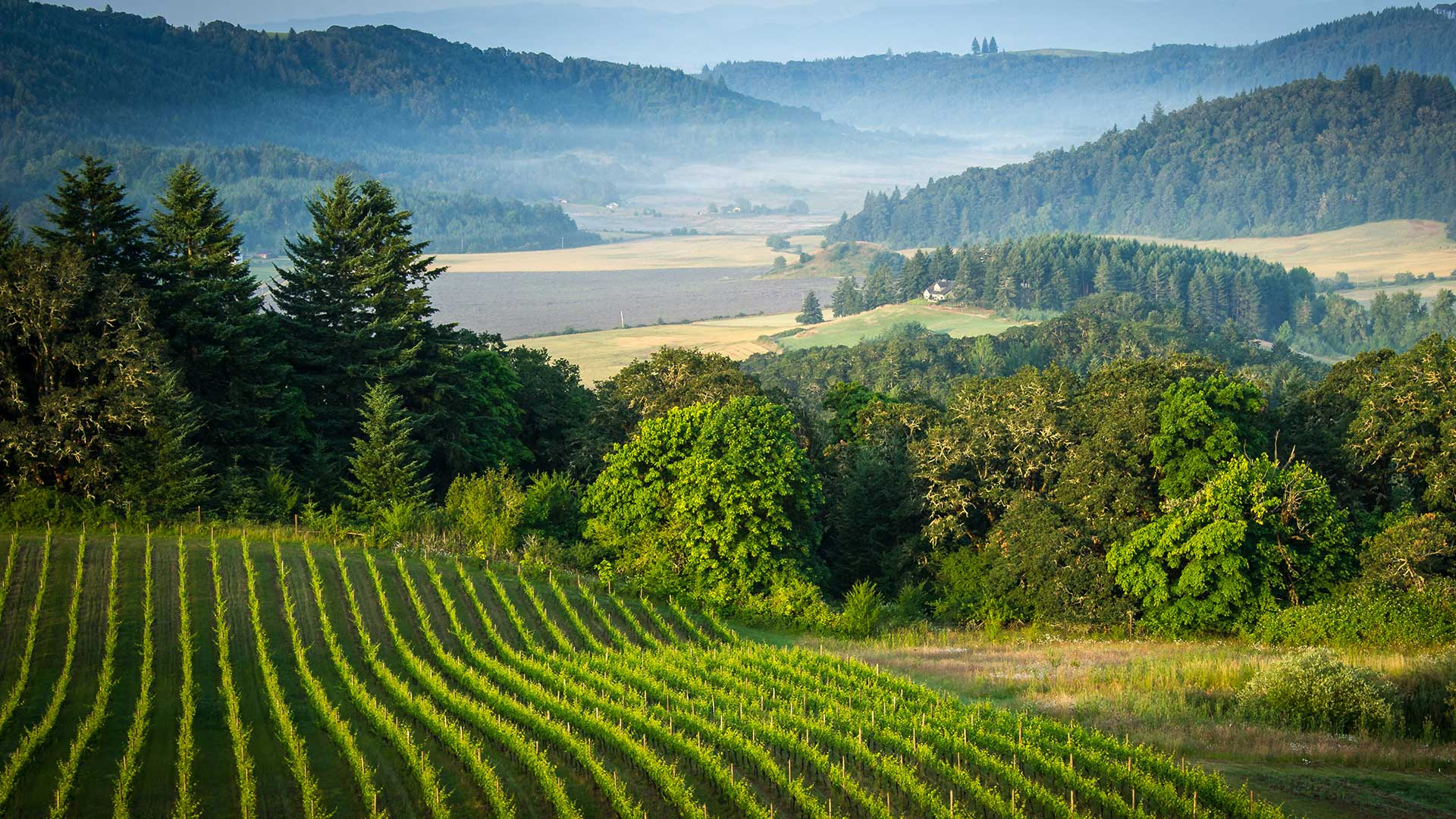 Oregon Wine Country AVA Vineyard and Winery