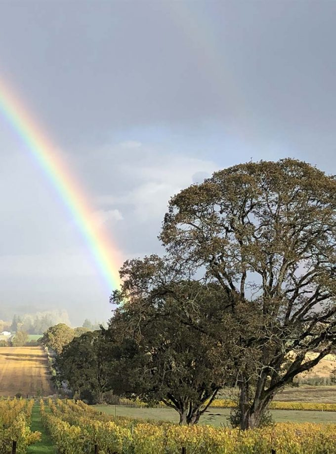 Custom Wine Tasting Tour: Oregon winery with rainbow